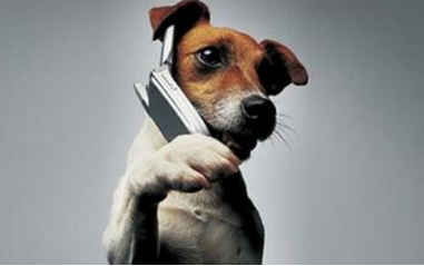 电话结束用语
